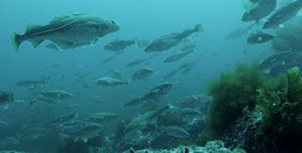 Respeto con los recursos marinos