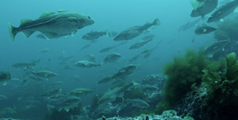 Respeito pelos recursos marinhos